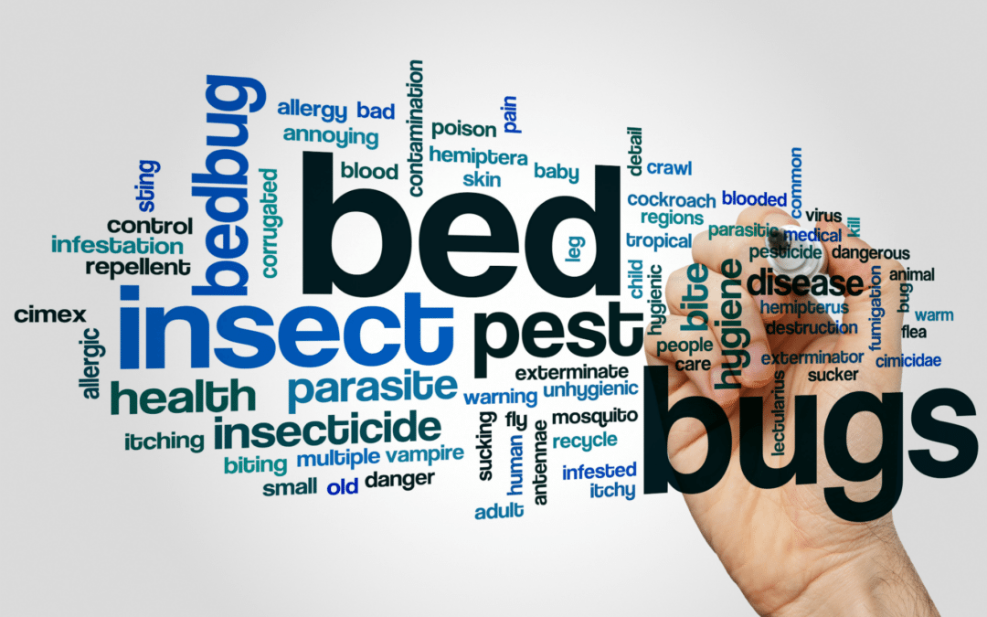 How To Tell If You Have Bed Bugs5 min read